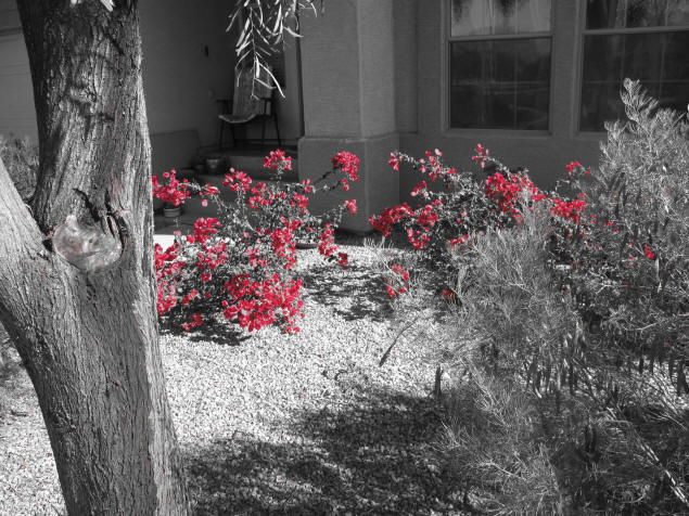 "Example of Canon Powershot G10's ""Color Accent"" mode."
